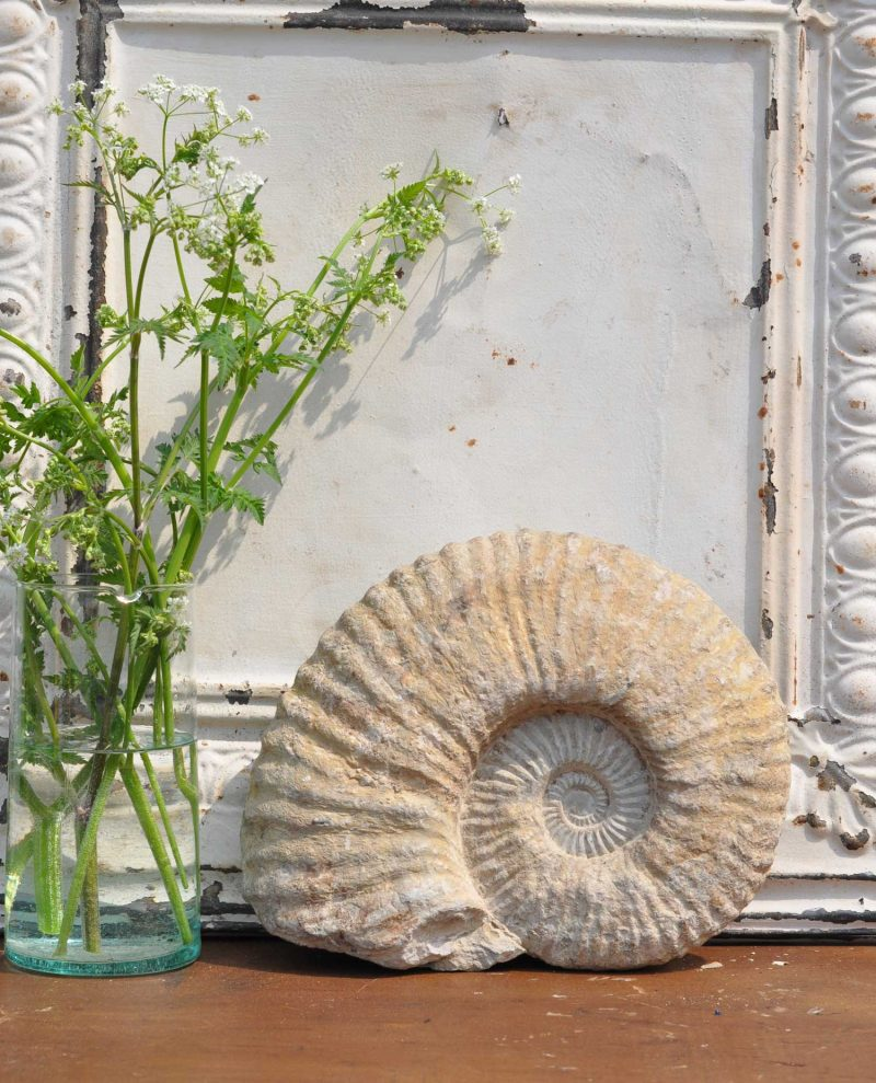 Real Stone Fossil Ammonite