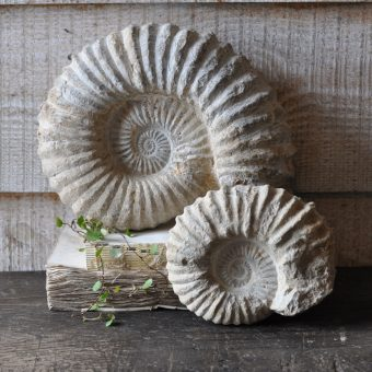 Stone ammonite fossil