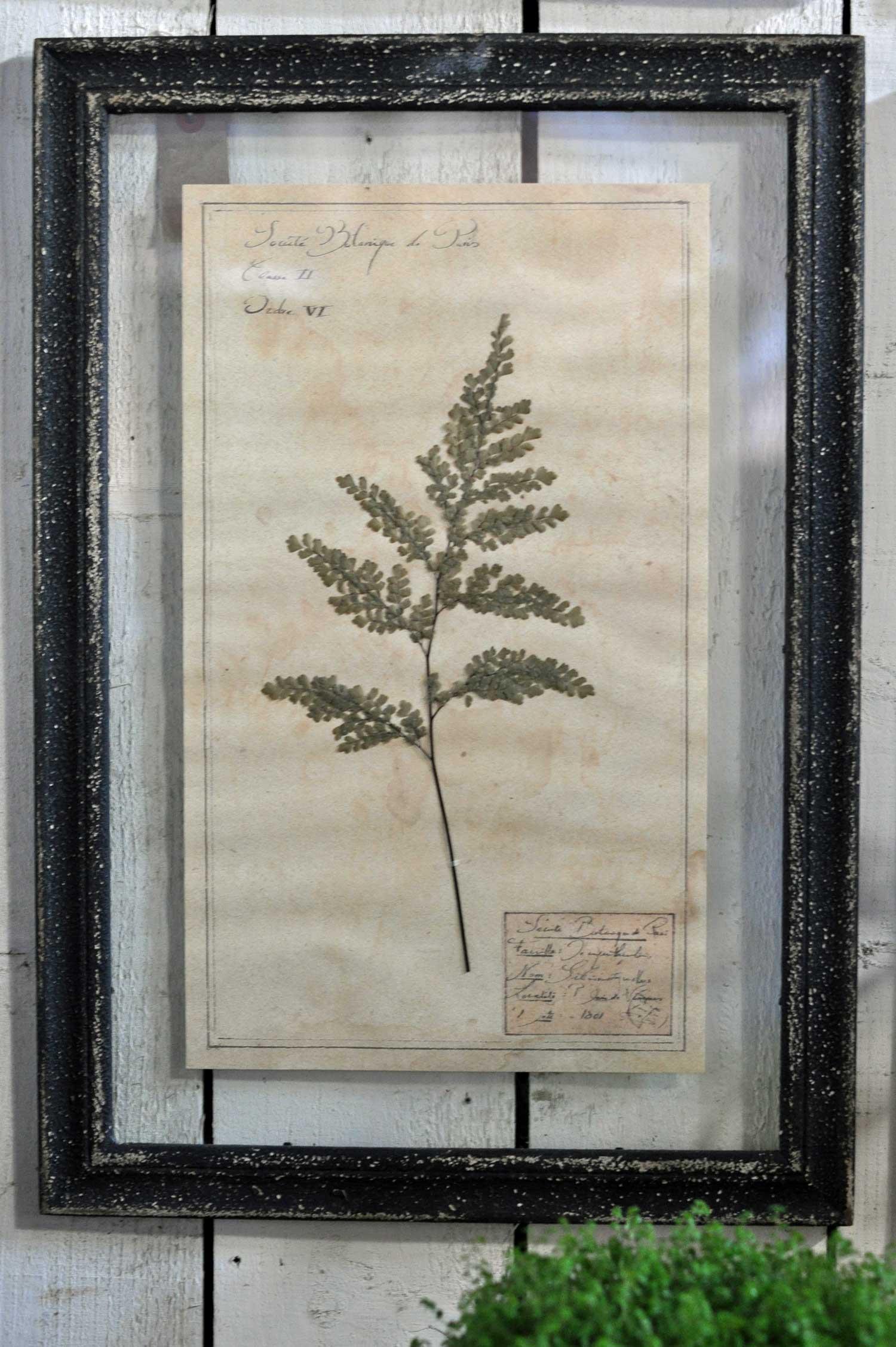 Framed Pressed Botanical Artwork With Hand Pressed Specimens