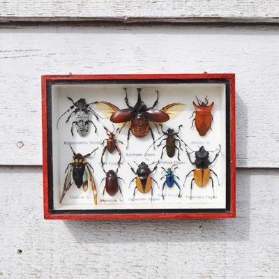 Small Vintage Glass Box Framed Bugs and Insects - Home Barn Vintage
