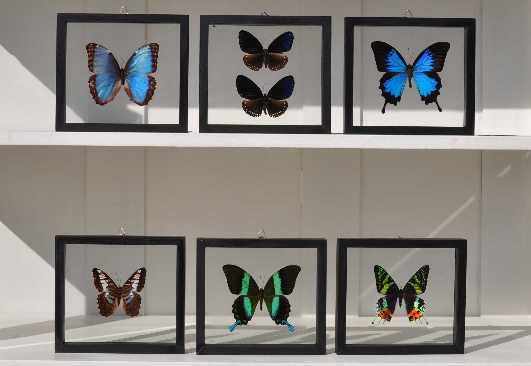 Framed Real Butterfly Specimens Set Of 6 Home Barn Vintage