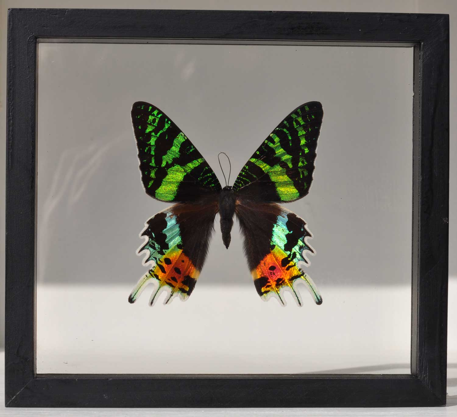 Framed Real Butterfly Specimens - Set of 6 - Home Barn Vintage