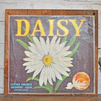 Fruit Crate Signs - Daisy sunkiss