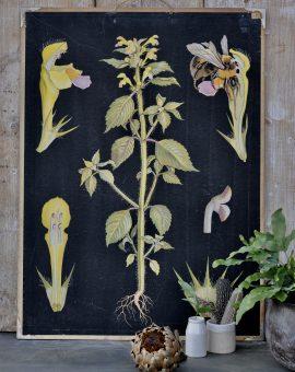 Vintage Scientific Botanical Teaching Aid Print Mounted On Card
