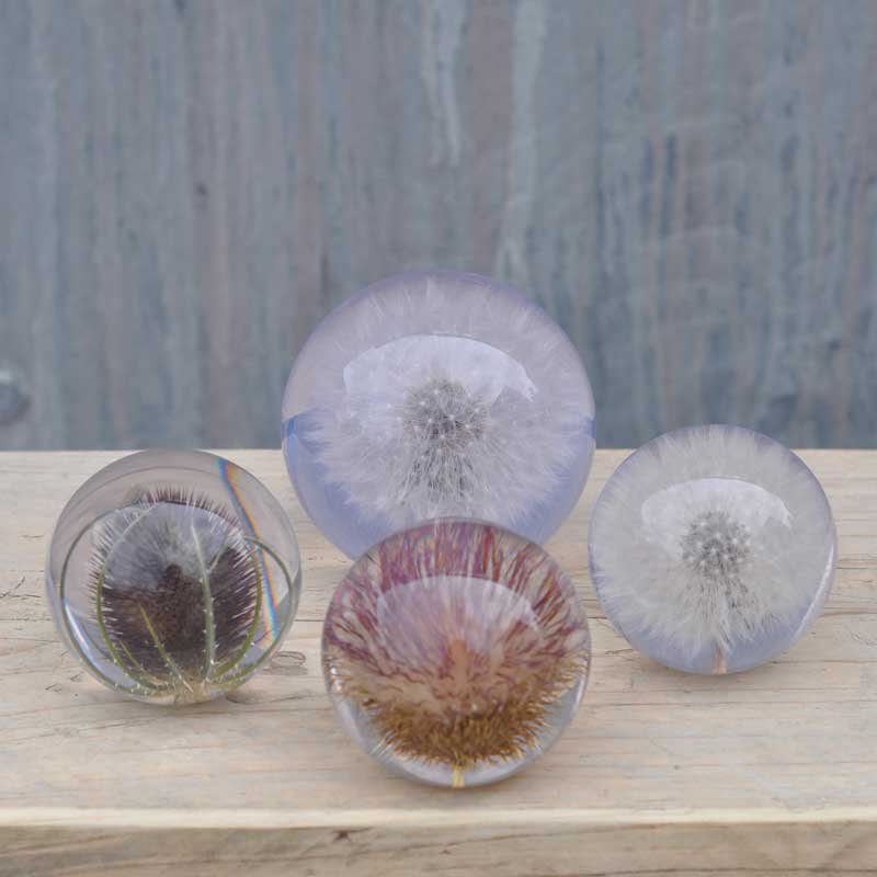 Botanical Paperweight Ornament Thistle, Dandelion or Teasel