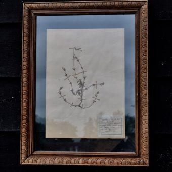 Antique framed botanical specimen herbarium | Home Barn Artwork
