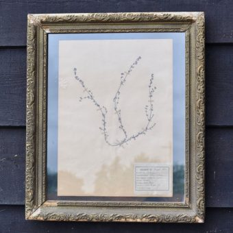Antique framed botanical specimen herbarium dated 1918 | Home Barn