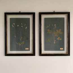Pressed Botanical Artwork