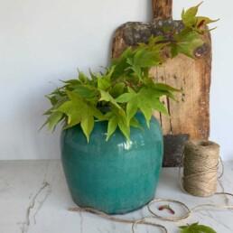 antique chinese pharmacist ceramic pot | turquoise