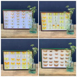antique framed butterfly collection