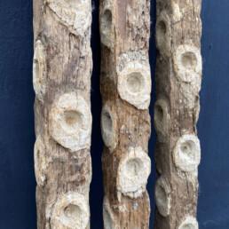 set of oyster sticks