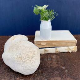 Vintage branch coral specimen