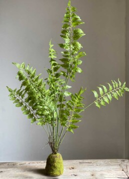 Faux Fern Rootball Cluster