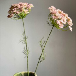 Faux Pink Cow Parsley