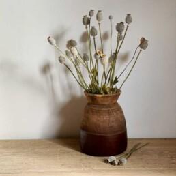 Dried Flower Giant Poppy