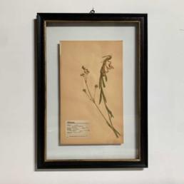 FRAMED BOTANICAL | VINTAGE PRESSED FLOWER ARTWORK No: 10