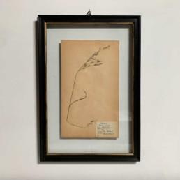FRAMED BOTANICAL | VINTAGE PRESSED FLOWER ARTWORK No: 7
