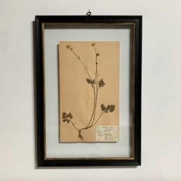 FRAMED BOTANICAL | VINTAGE PRESSED FLOWER ARTWORK No: 9