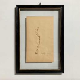 FRAMED BOTANICAL | VINTAGE PRESSED FLOWER ARTWORK No: 1