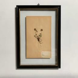 FRAMED BOTANICAL   VINTAGE PRESSED FLOWER ARTWORK No: 6
