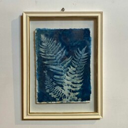 FRAMED CYANOPRINTS   BOTANICAL ARTWORK No: 1