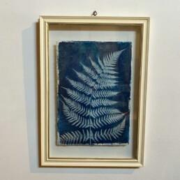 FRAMED CYANOPRINTS   BOTANICAL ARTWORK No: 2