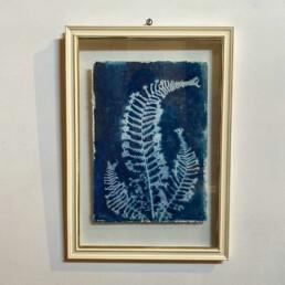 FRAMED CYANOPRINTS | BOTANICAL ARTWORK No: 4