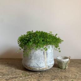 Small Tin Planter | Gold Stripe